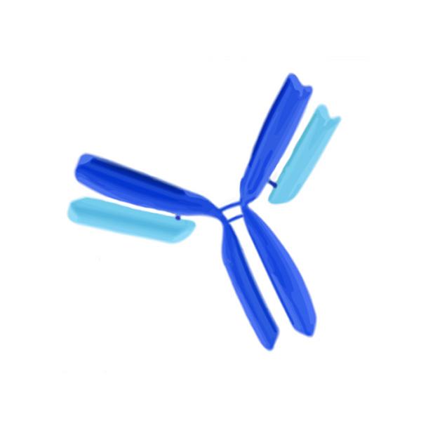 Millipore/MAB8671F-5 | Anti-Influenza B Antibody, Core, clone 22D5-12-13/MAB8671F-5/500 µg